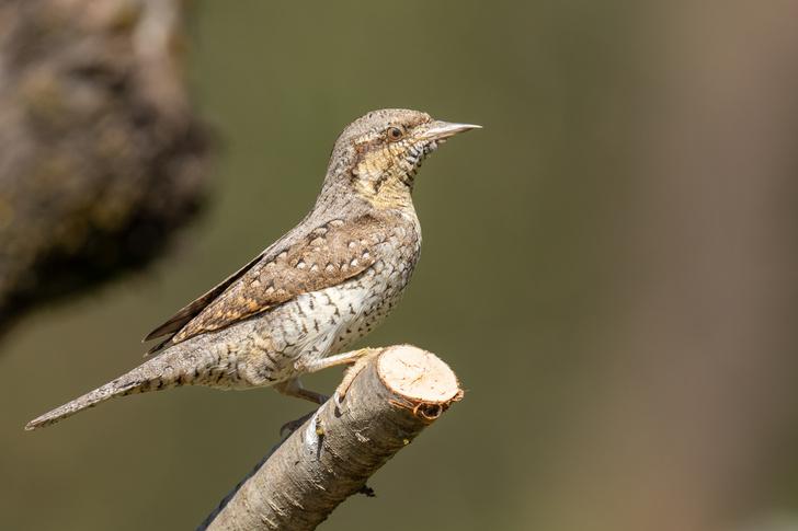 Фото №1 - Почему птицы не падают, когда спят на ветке?