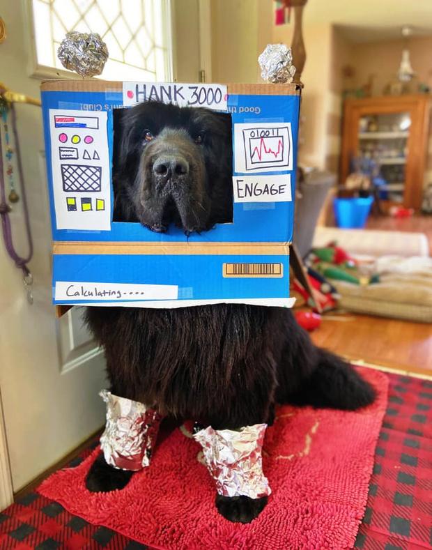 Фото №5 - Хозяйка ньюфаундленда каждый день на карантине делает ему смешную прическу и выкладывает фото