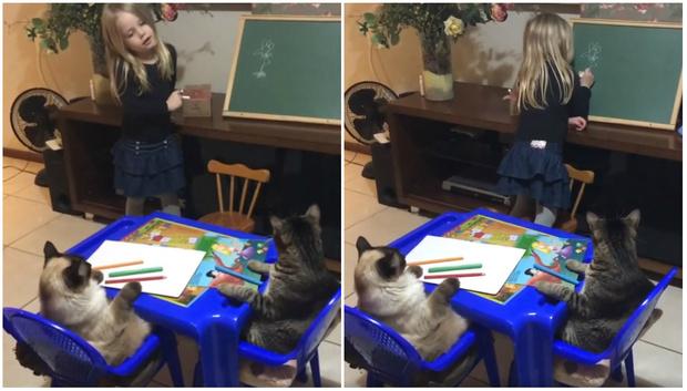 Фото №1 - Видео с девочкой, которая учит своих котов рисовать цветок, набрало 1,5 тысячи комментариев
