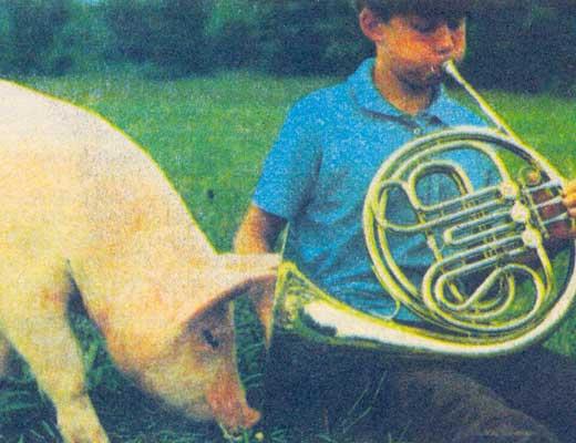 Фото №1 - Кто свинье товарищ?