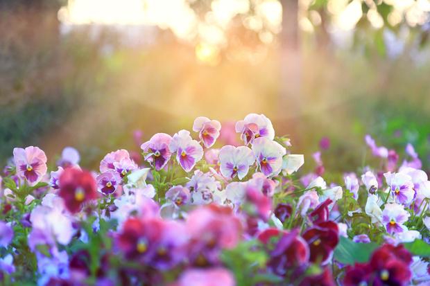 Фото №11 - Весы— роза, Рыбы— лотос: какой вы цветок по знаку зодиака