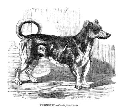 Вертельная собака, гравюра 1862 года