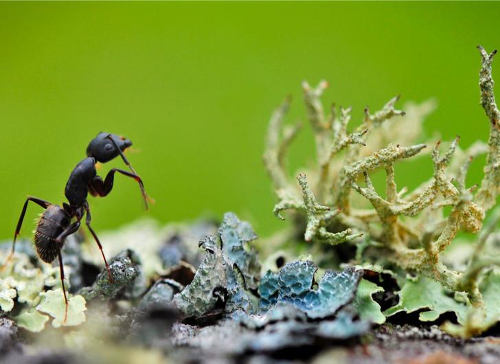 Фото №13 - Фотогалерея: лесные истории