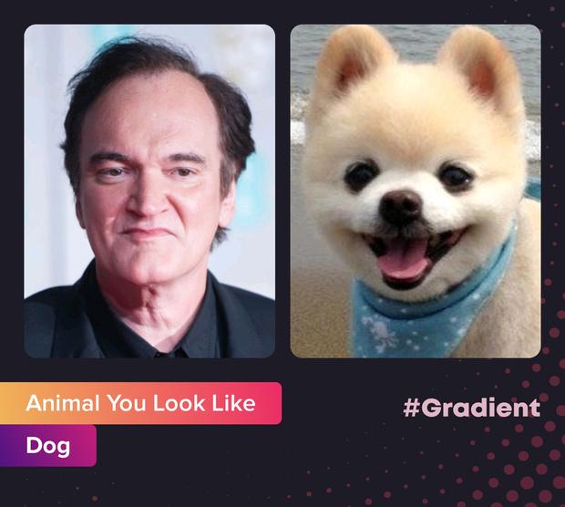 Фото №8 - На какое животное ты похож: новое развлечение от приложения Gradient