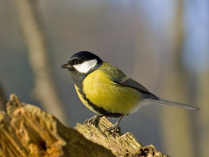 Фото №1 - Птицы способны проявлять самоконтроль