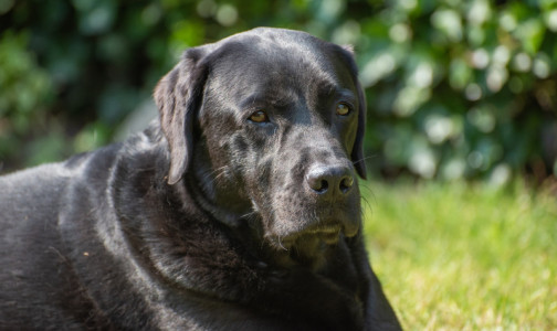 Фото №1 - В Европе собаки будут вынюхивать ковидных пассажиров. В обучении кинологам помогут переболевшие и привитые