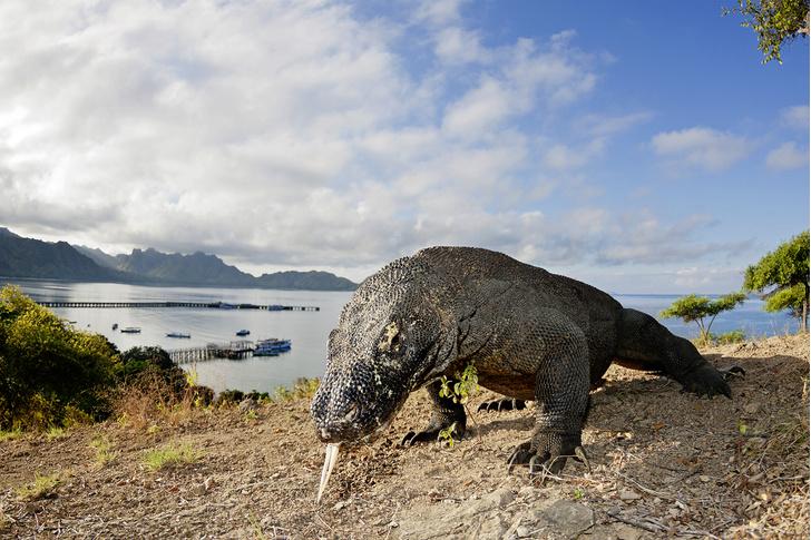 Фото №4 - Зоология: островитяне