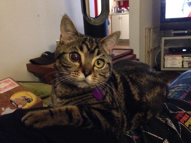 Фото №3 - ATTENTION! Глазастые кошки-пришельцы наступают!