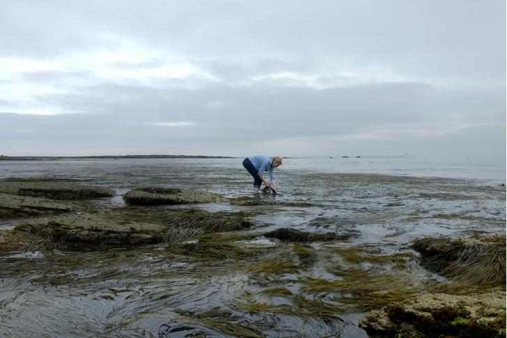 Фото №1 - Человек умелый: королева водорослей