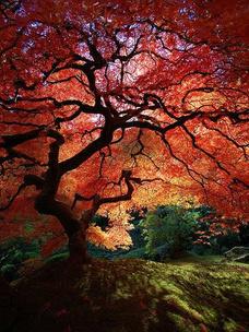 Фото №5 - Тест: Выбери дерево, и мы скажем, во сколько лет ты станешь успешной