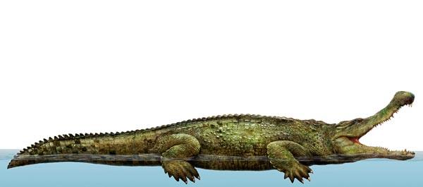 Фото №1 - Удивительная живучесть крокодильего племени