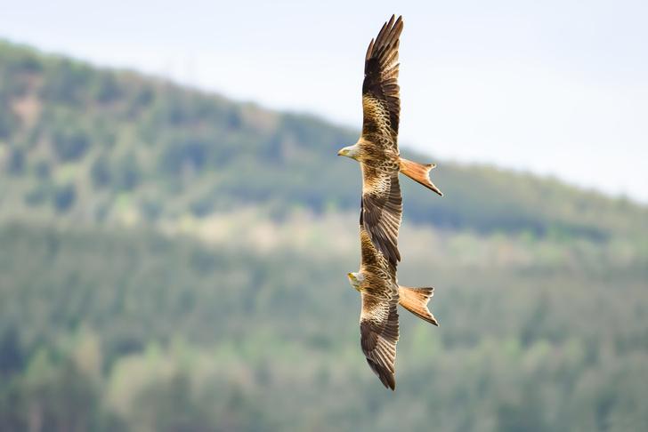 Фото №1 - Два крыла