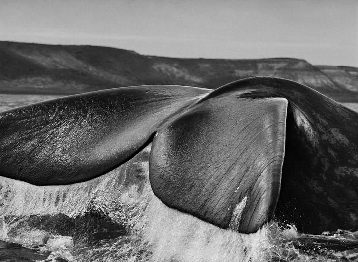 Фото №5 - Фотогалерея: Экспедиция вокруг Земли с Себастио Сальгадо