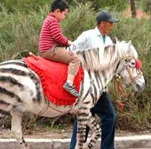 Фото №1 - В Китае подделали зебру