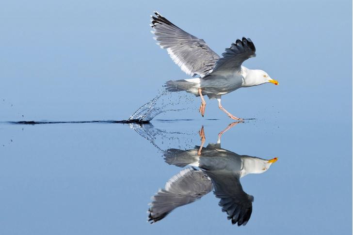 Фото №1 - Гулять по воде