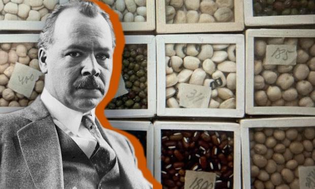 Фото №1 - Как ленинградские ученые погибли от голода среди мешков продовольствия