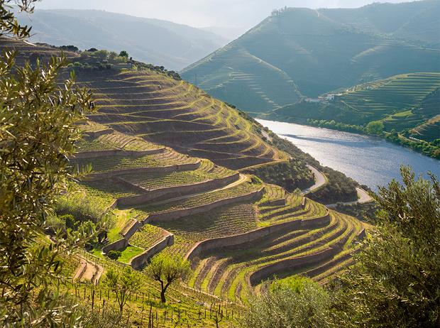 Фото №4 - Зеленое вино: что такое Vinho Verde и почему оно такое редкое (у нас)