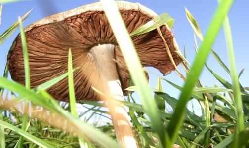 Фото №1 - Вредно ли собирать грибы в Ленинградской области?