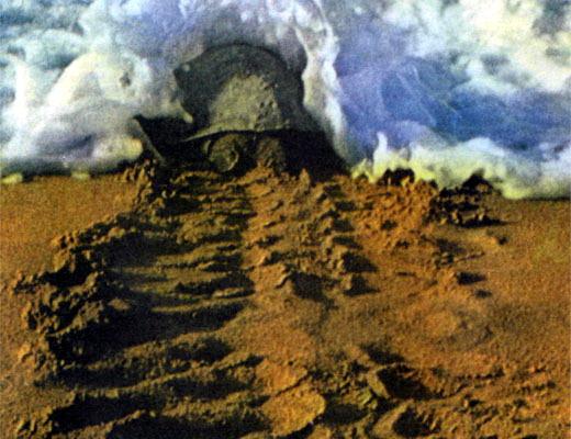 Фото №1 - Черепаха, которую не съели