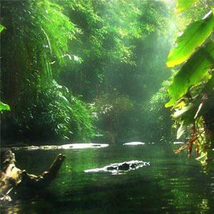 Фото №1 - Борьба за спасение лесов
