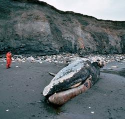 Фото №9 - Нефть: в поисках Клондайка