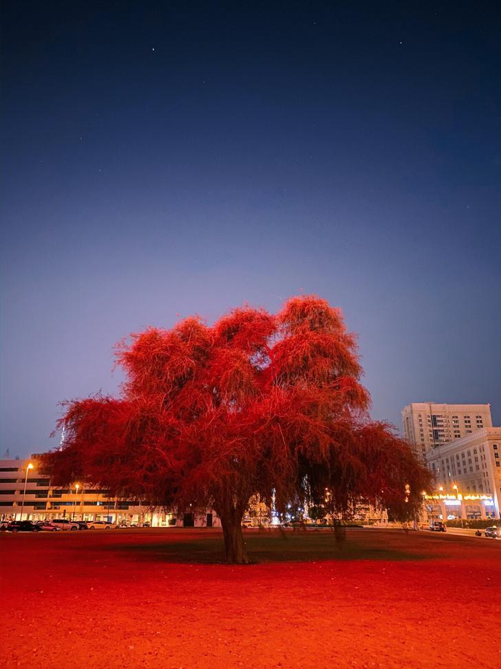 Фото №5 - В конкурсе Apple на съемку в ночном режиме iPhone победила фотография УАЗа «буханки»