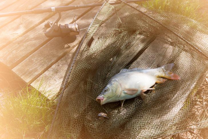 Фото №1 - Почему речная рыба костлявее морской?