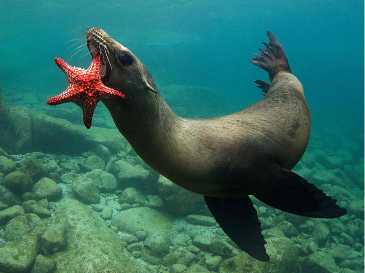 Фото №1 - Звезда под водой