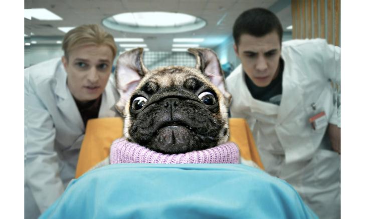 Фото №1 - В Сети обсуждают рентген-снимок мопса, который выглядит одновременно жутким и милым