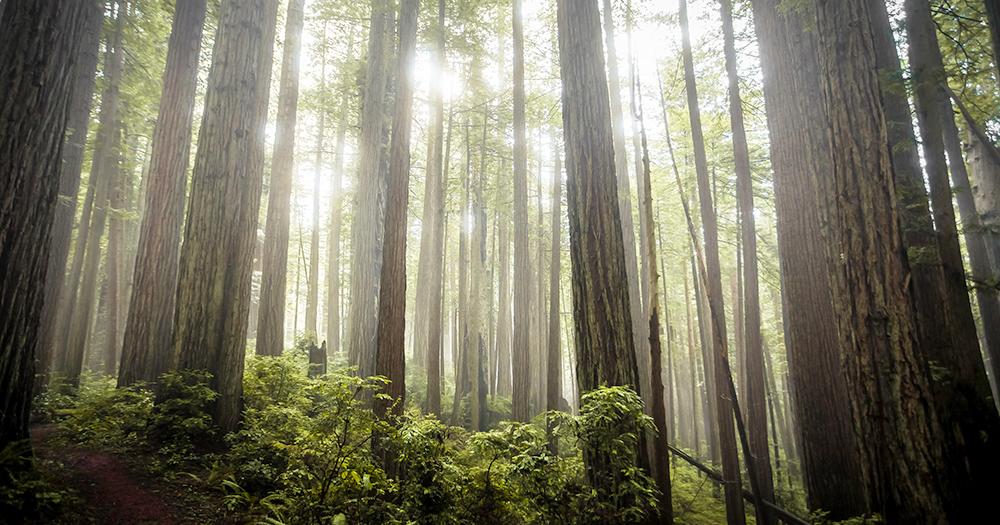Об эволюции растений - К чему стадам дары свободы... — ЖЖ || Эволюция растительности как выглядели самые древние растения