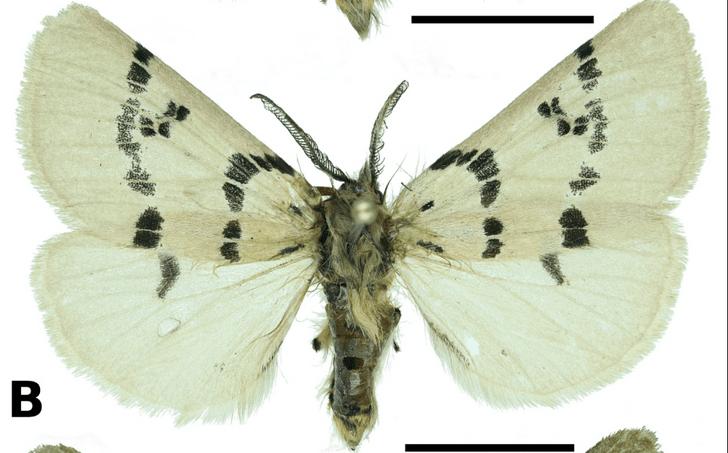 Фото №1 - Российские ученые открыли новый вид бабочек на Тянь-Шане и Памире
