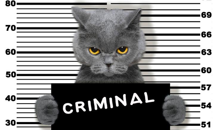 Фото №1 - Лапы вверх: животные и птицы, которые были арестованы за различные преступления