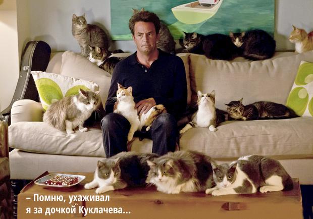 Фото №1 - Код кота: 31 ответ на вопросы котовладельца