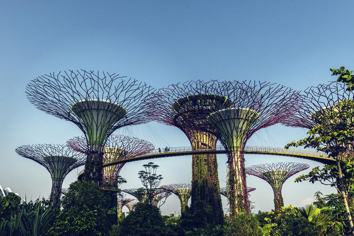 Фото №1 - Место дня. «Сады у залива» (Сингапур)