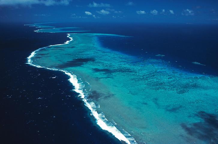 Фото №1 - Площадь коралловых рифов уменьшилась вдвое с 1950-х