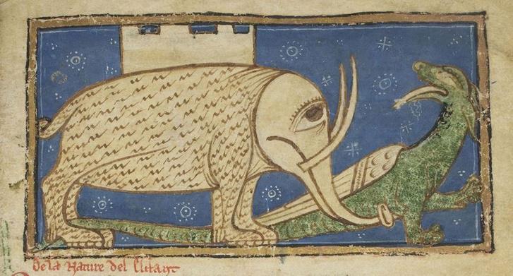 Фото №7 - Как в старину художники изображали животных, которых никогда не видели (25 странных существ)