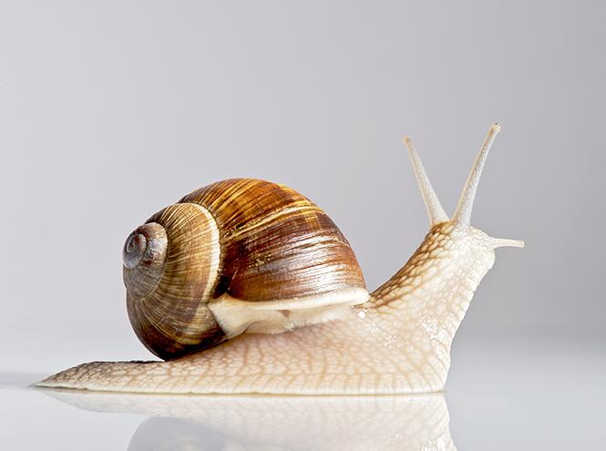Фото №4 - Бьюти-новинка недели: крем Dr Organic Snail Gel