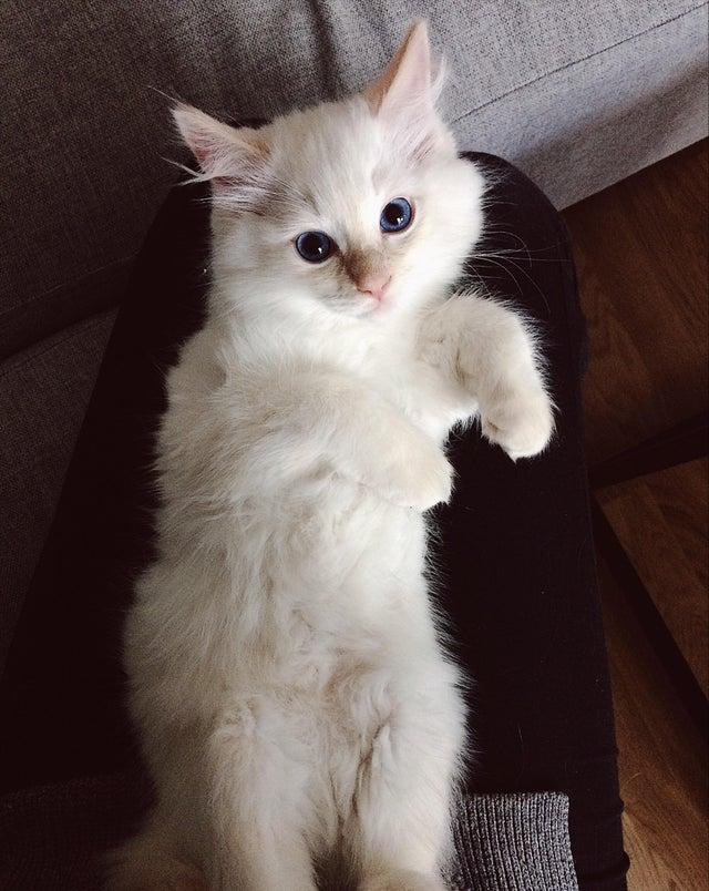 Фото №2 - Кот на полчаса остался один дома, и скрытая камера сняла, как он провел время (видео)