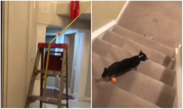 Фото №1 - Кошка чуть-чуть не испортила требующий огромной подготовки фокус с мячиком (видео)