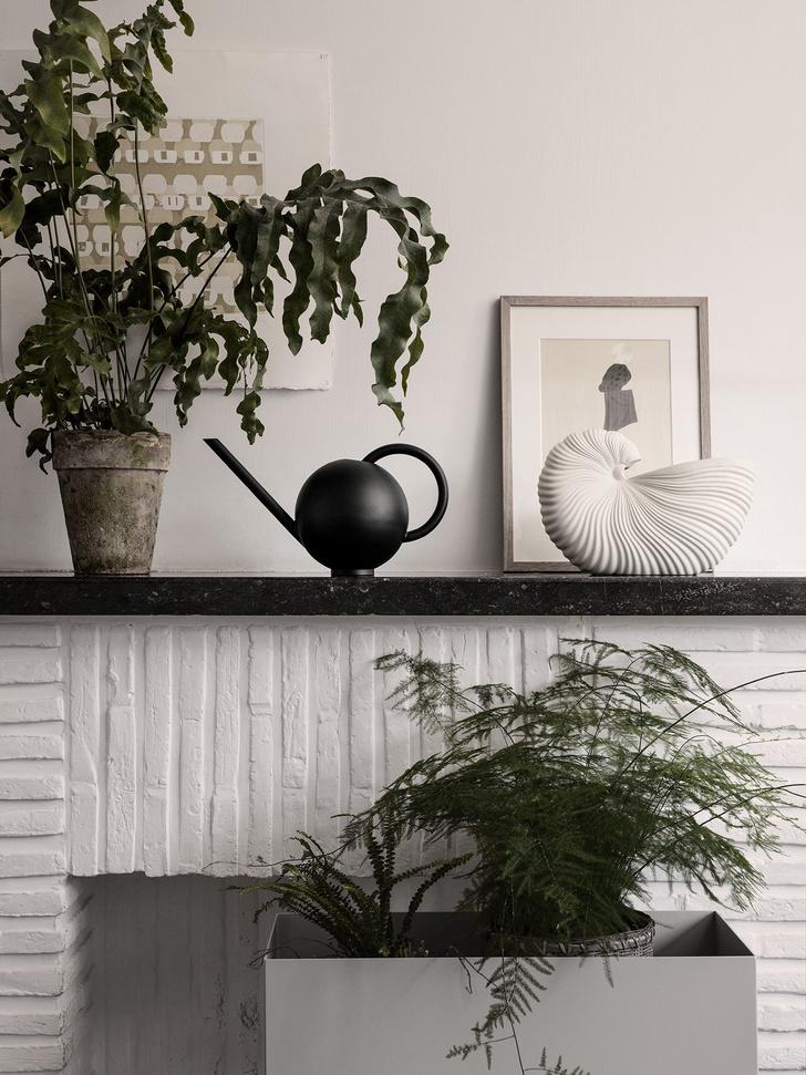 Фото №2 - Как правильно поливать комнатные растения: 5 советов