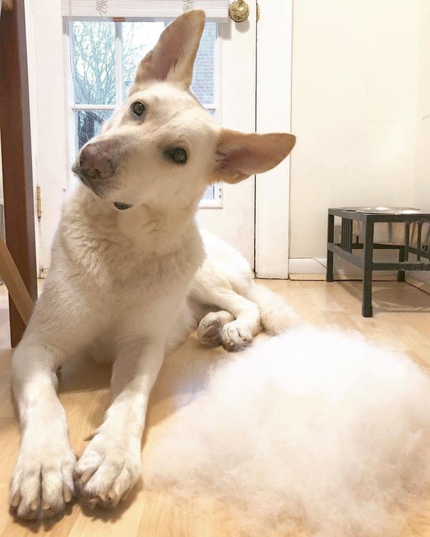 Фото №2 - Девушка создает забавные образы для своей собаки из ее собственной шерсти (много фото)