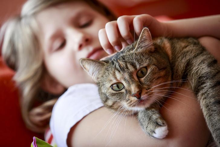 Фото №1 - Кошачьи паразиты могут снижать успеваемость детей в школе