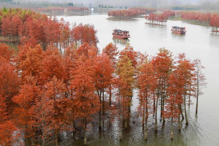Фото №3 - Генералы среди деревьев: 10 удивительных фактов о гигантских секвойях