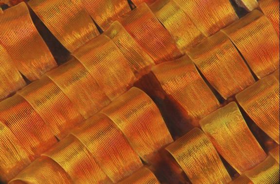 Фото №1 - Жизнь под микроскопом: семь фотографий