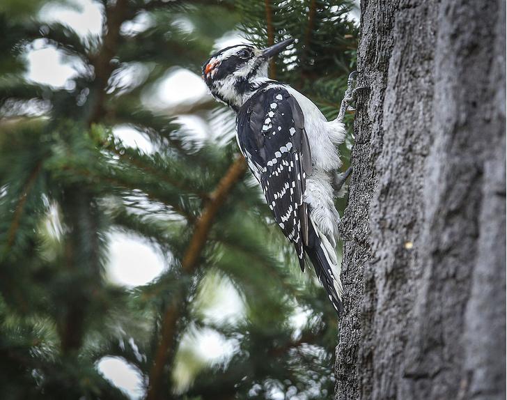 Фото №3 - По ком стучит дятел: 6 занимательных фактов о лесных птицах
