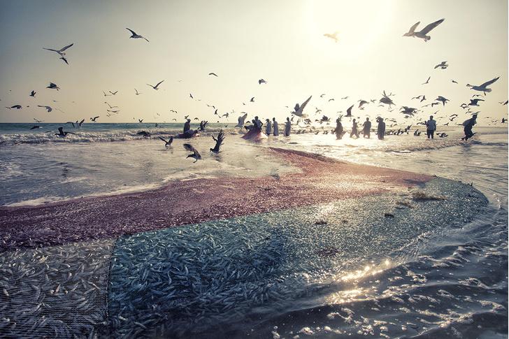 Фото №1 - Ловцы сардины