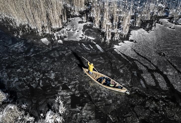 Фото №1 - Сбор тростника зимой в Турции