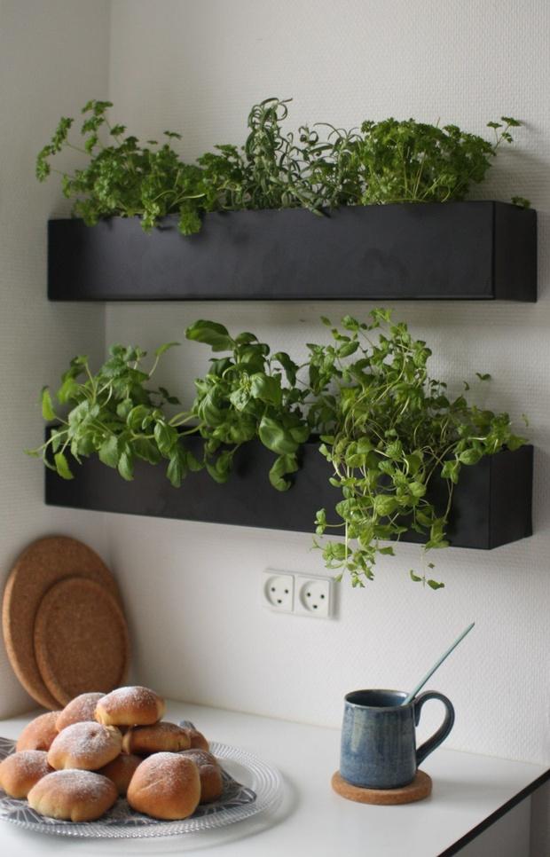 Фото №5 - Растения в интерьере: 6 идей для создания мини-сада