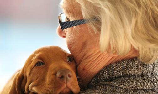 Фото №1 - Перелом бедра у пожилых будут лечить быстрее, чтобы снизить смертность