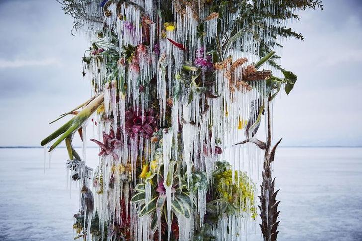 Фото №2 - Инсталляция из замороженных цветов на Хоккайдо